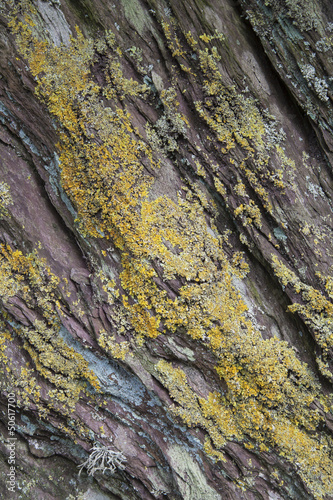 Rock / Cliff with Lichen Background Texture / Nature Abstract.