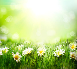 Spring Meadow with Daisies. Grass and Flowers border