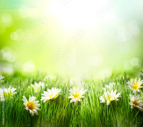 Foto op Aluminium Madeliefjes Spring Meadow with Daisies. Grass and Flowers border
