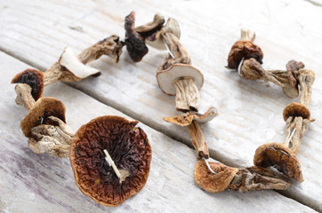 Dried mushrooms bunch over wooden background