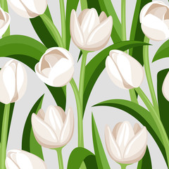 Seamless background with white tulips. Vector illustration.