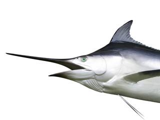 Marlin - Swordfish