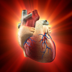 Real Heart Shinning in Light - Human Anatomy model