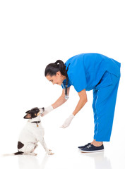 vet doctor playing with dog