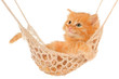 Cute red haired kitten lying in hammock.