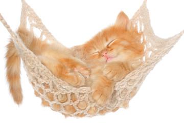 Cute red haired kitten sleeping in hammock
