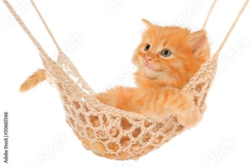 Cute red haired kitten lying in hammock.