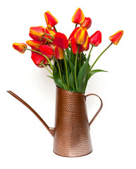 tulips in a watering can