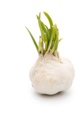 garlic isolated on white background with clipping path