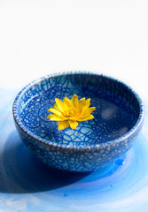 Beautiful yellow flower in blue cup