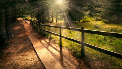 Welcoming path