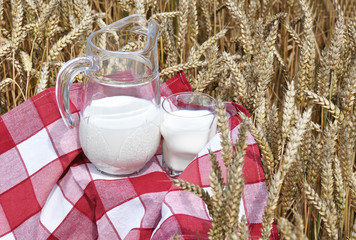 Jug of milk against wheat field