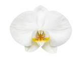 Close up of orchid isolated on white background