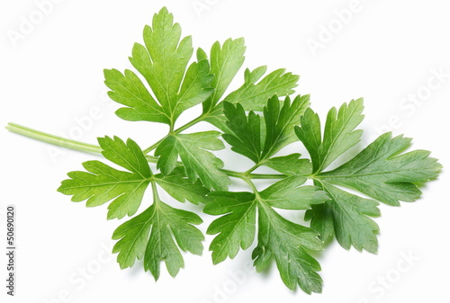 canvas print picture Parsley.