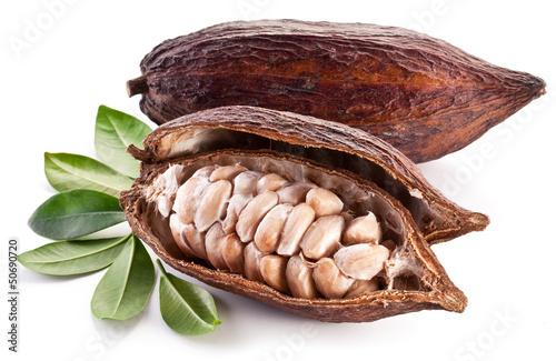 Cocoa pod - 50690720