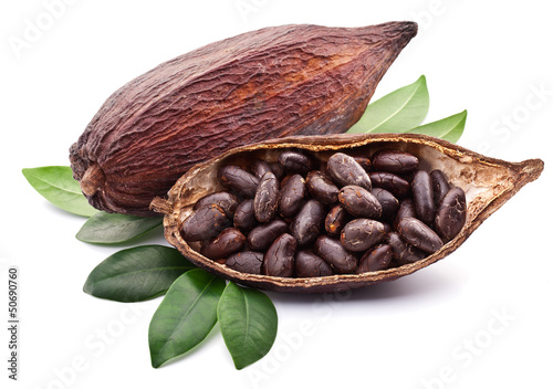 canvas print picture Cocoa pod
