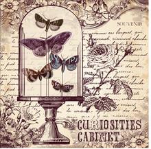 Le Cabinet Curiosités