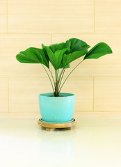 Green plant in blue vase decorated for room