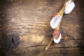 Catkins branches in a rustic wooden board.