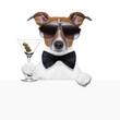 funny cocktail dog banner