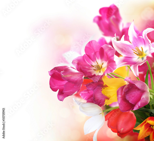 Deurstickers Tulp Spring Flowers. Tulips bunch