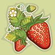 Red strawberries.Vector illustration