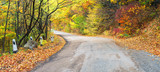Road in the autumn forest. Beautiful landscape