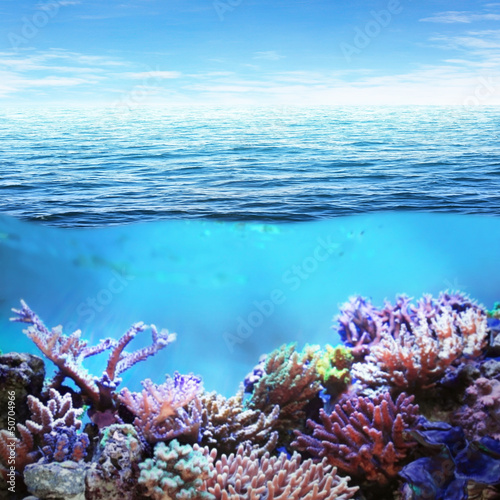 Sea underwater view