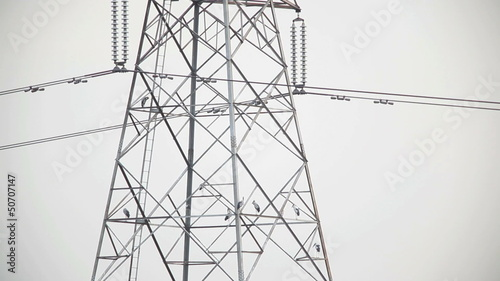 bird on High voltage tower, Speed Movie