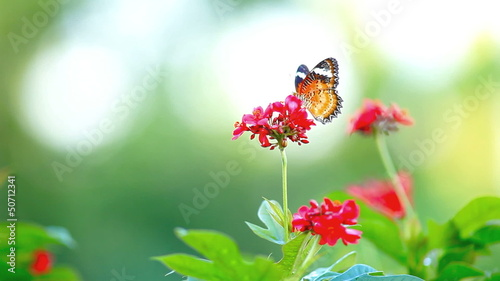 Butterfly and Red Flower