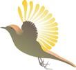 Vogelflug 2