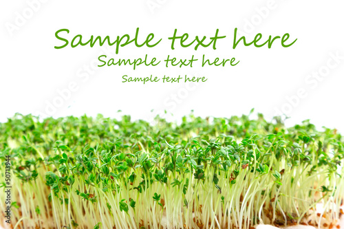 Easter garden cress with sample text