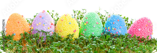 Colorful Easter eggs in garden cress over white background