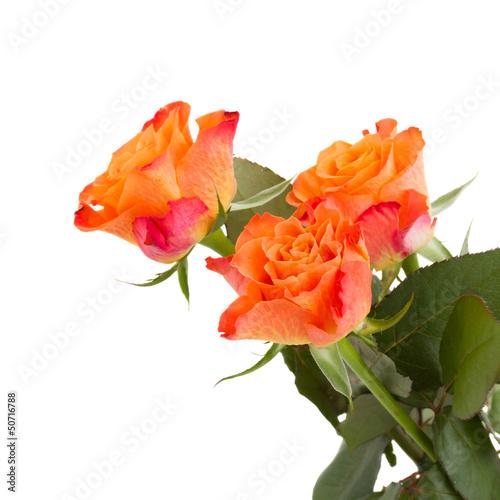 three orange rose