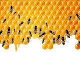 Vector Background with Honeycombs and the Bees