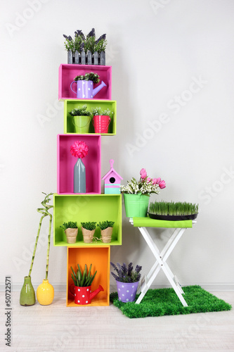 Colorful shelves with decorative elements and plants standing