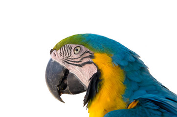 Parrot with isolated background