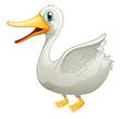 A white fat duck