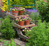 Pansy filled Flowerpots on a display stand