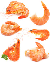 Appetizing shrimps