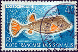 Blue spotted boxfish (French Somali Coast 1958)
