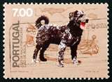 Postage stamp Portugal 1981 Cao de Agua, Breed of Dog from Portu poster