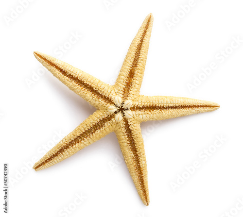 Starfish isolated on white background. Sea stars and shells.