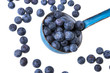 a ladle with blueberries on white background