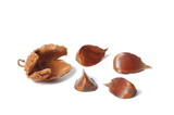 Nuts of Common Beech