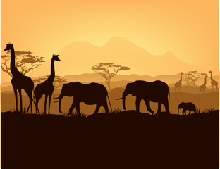 African animals silhouettes in sunset