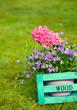 Frühlingsblumen in Holzbox