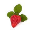 Erdbeeren mit Blätter Freisteller I