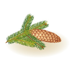Spruce branches with cones on a white background, vector