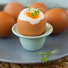 egg soft-boiled boiled